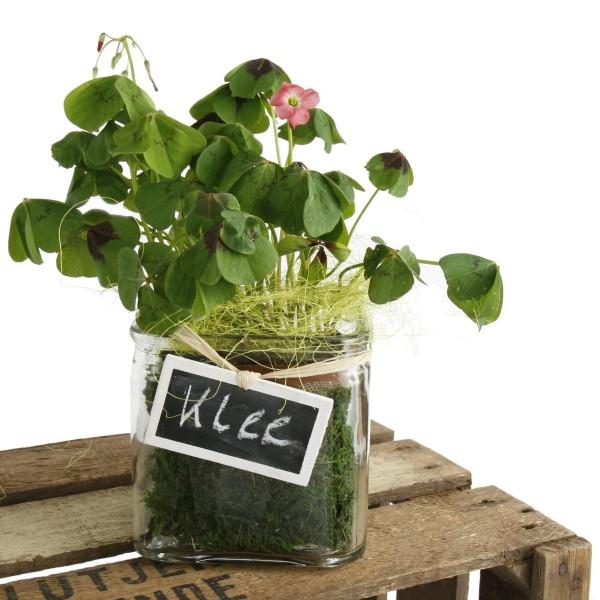 Pflanztopf aus Glas 12 x 12 cm